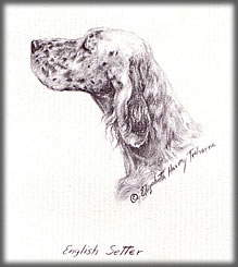 A Portrait of an English Setter